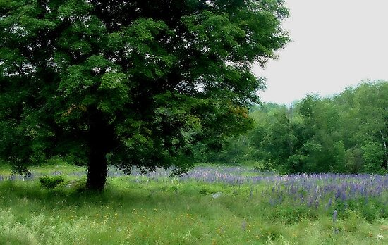I Planted a Field of Lupine in My Dreams by Wayne King