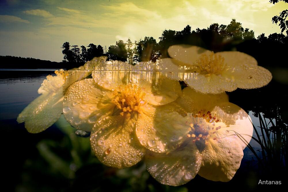 Dreams in landscape by Antanas