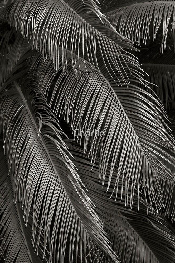 Robellini Palm by Charlie