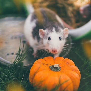 Halloween Rat by IndeaVanmerllin
