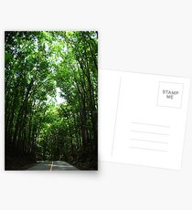 mahogany forest Postcards