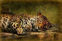 Wake Up, Sleepyhead!! by Lois  Bryan