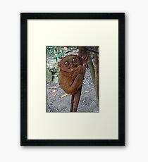 Tarsier Framed Print