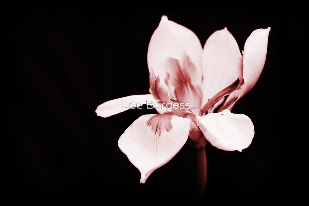In bloom... by Lee Burgess