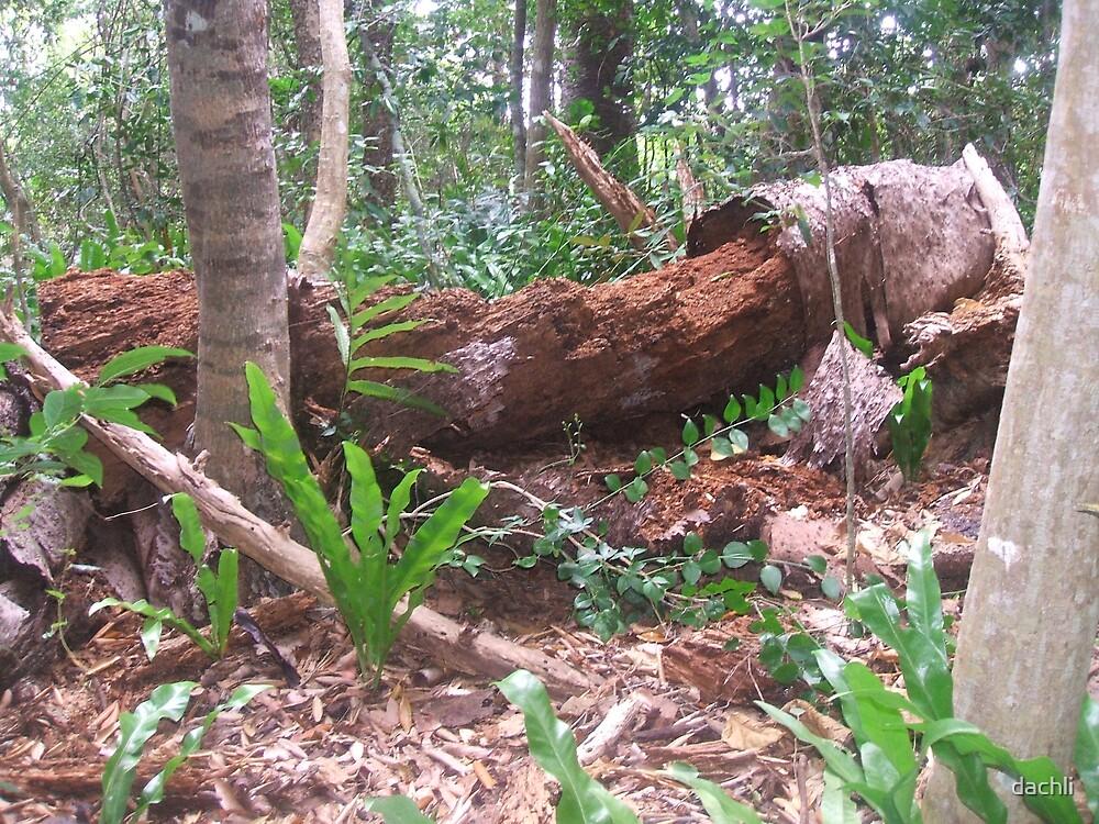 A Bush Setting by dachli
