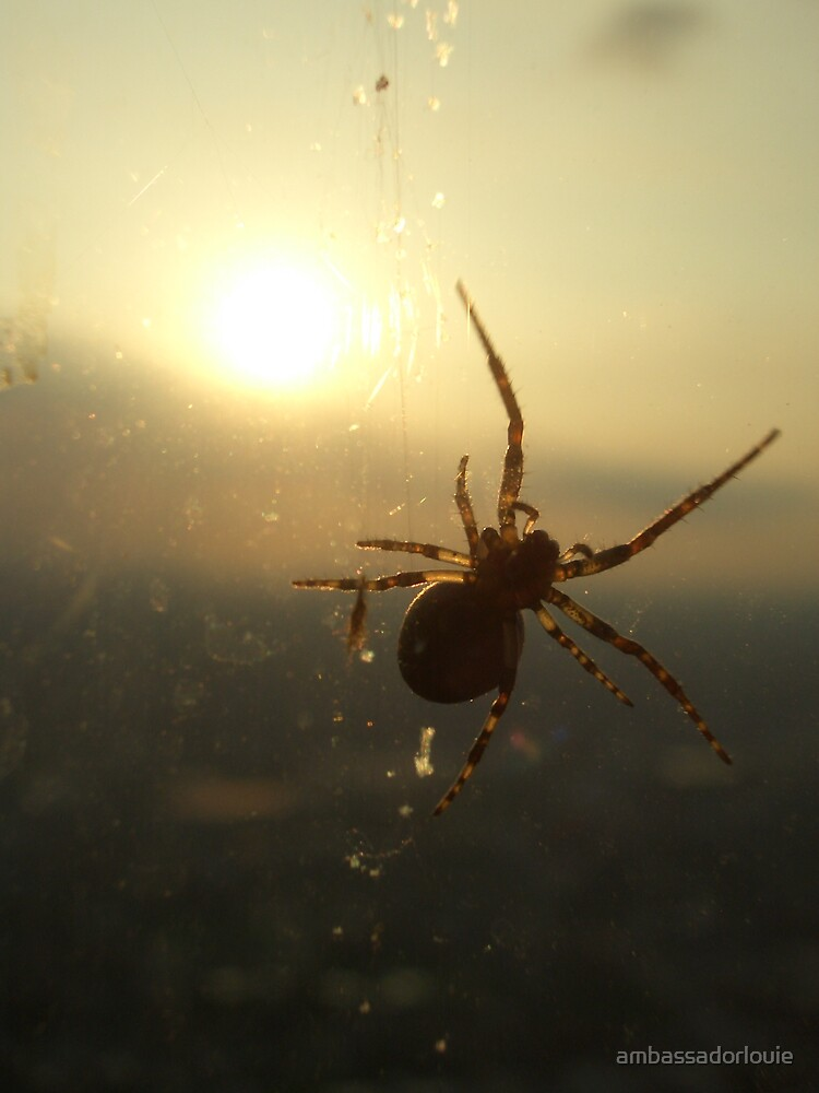 Blessed Spider by ambassadorlouie
