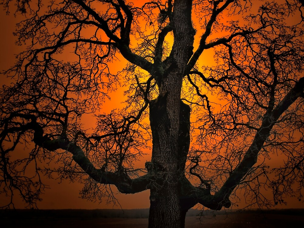 The Glow and Old Oak by Charles & Patricia   Harkins ~ Picture Oregon