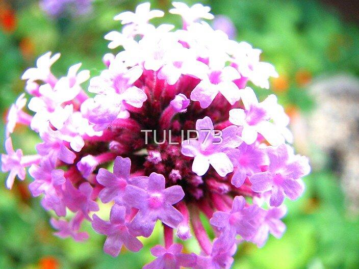 FLOWER by TULIP73