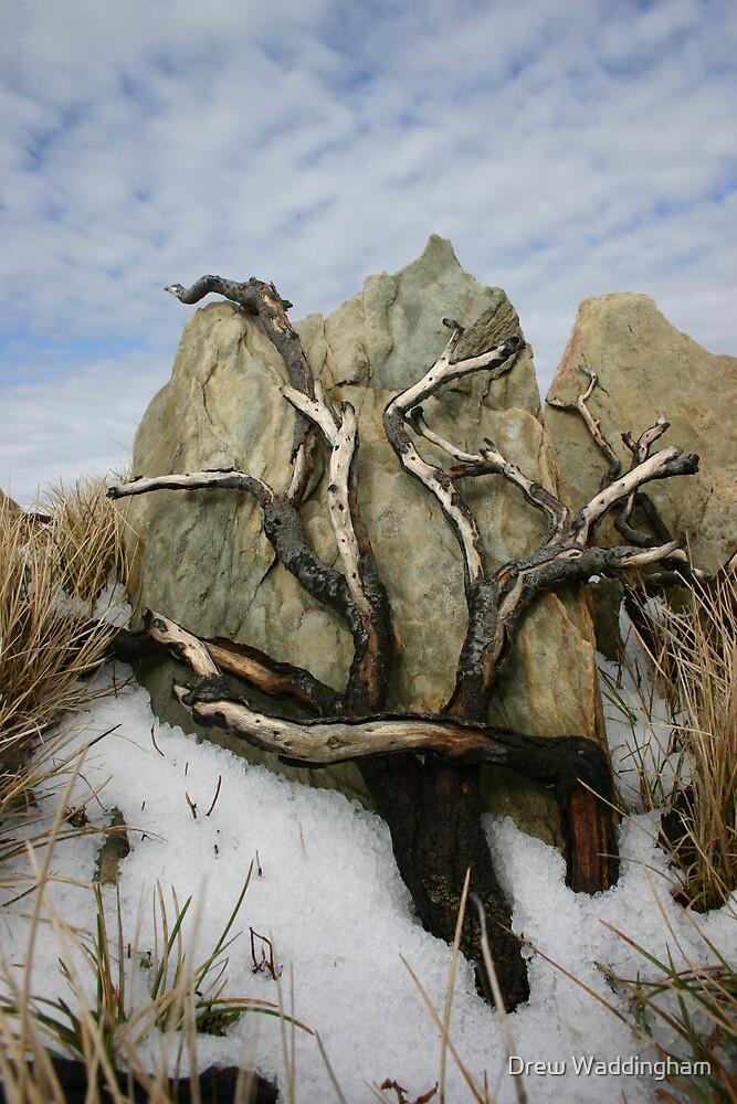 Tree, Rock & Snow by Drew Waddingham