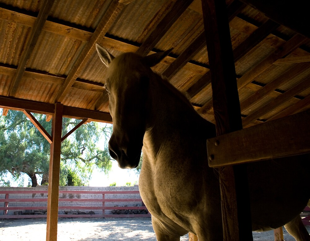 Los Alamitos Ranch - 2 by Francis Alfred