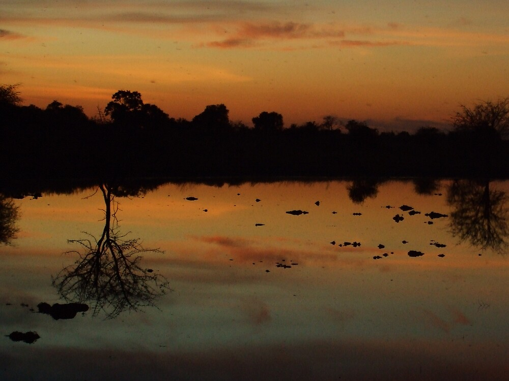 Reflect by Michael Dodd
