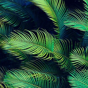 Tropical Aesthetic Palm Trees by emdizio