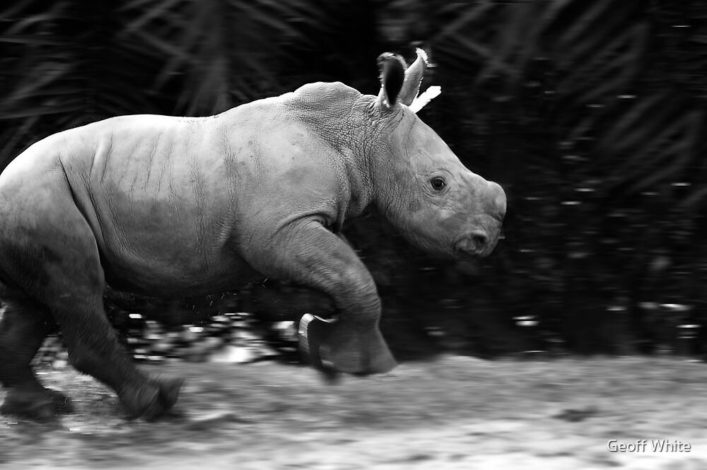 Baby Rhino by Geoff White