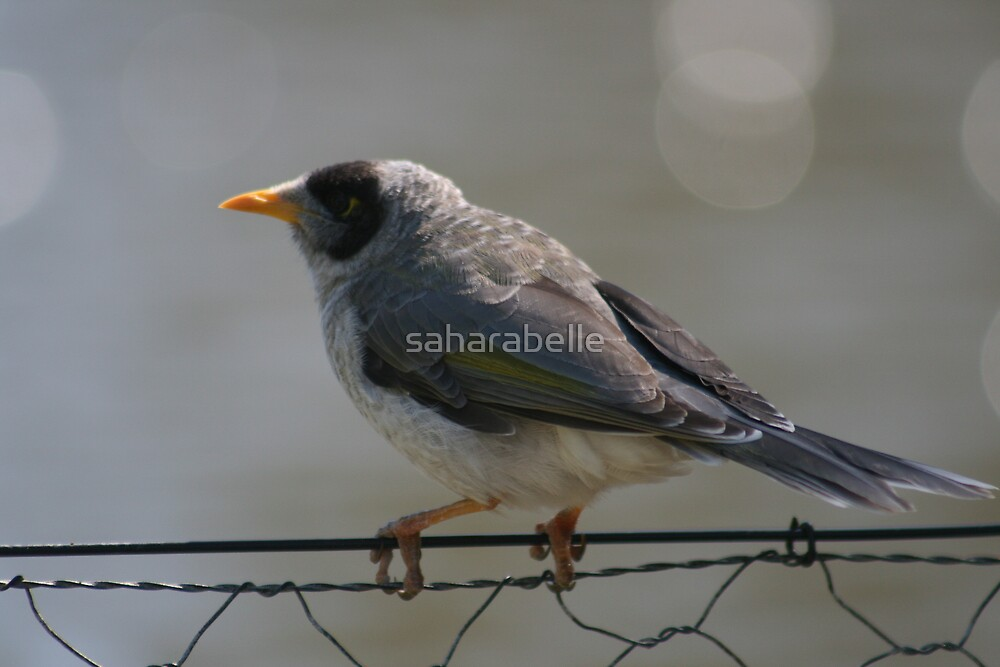 Bird On A Wire by saharabelle