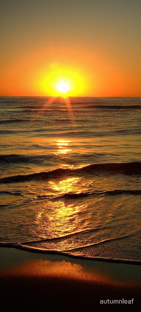 Sun rising above horizon by autumnleaf