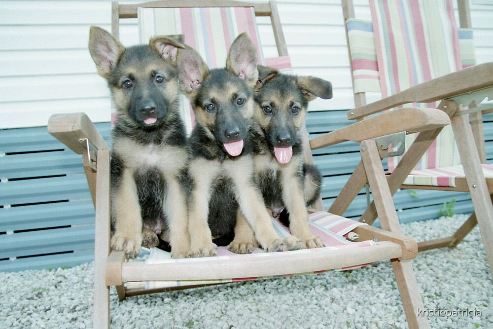3 pups by kristiepatricia