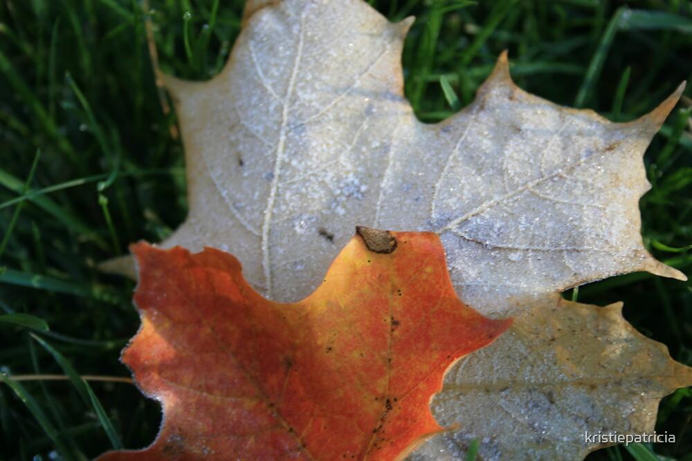 Foliage Frost- Littleton, Ma by kristiepatricia