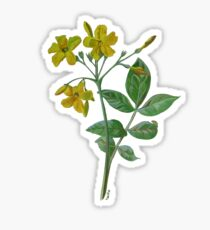 Carolina Jasmine Sticker