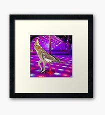 Cockatiel Stripper Framed Print