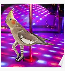 Cockatiel Stripper Poster