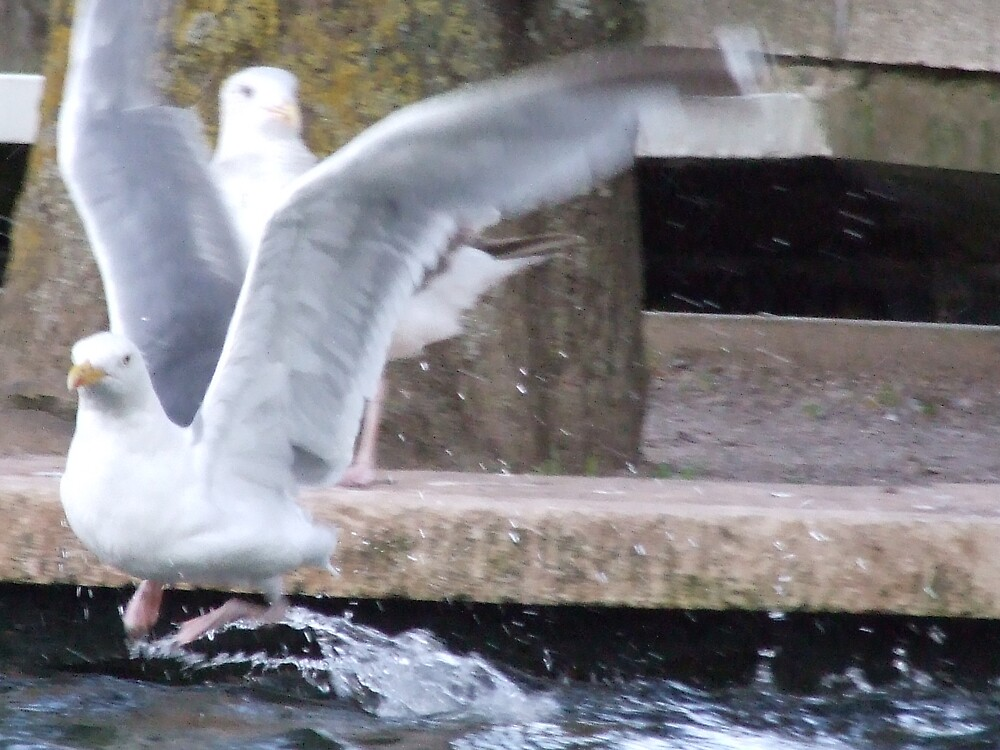 bird in flight3 by matjenkins