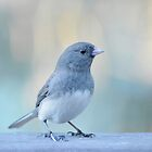 Junco  by Laurie Minor