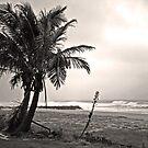 Lonely Palms by kaneko