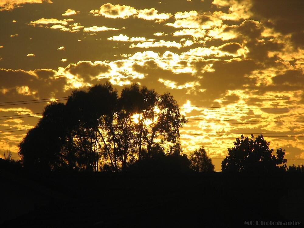 Sunny by Melissa  Carroll