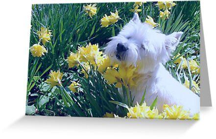 Shuna in the Daffodils by blod