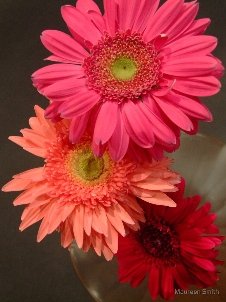 Three Lovely Gerberas by Maureen Smith