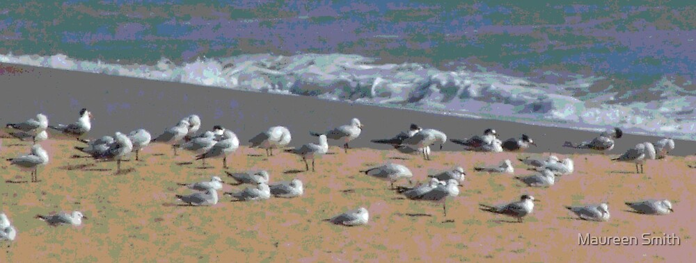 Seagulls at Hungry Hollow, Back Beach, Bunbury by Maureen Smith