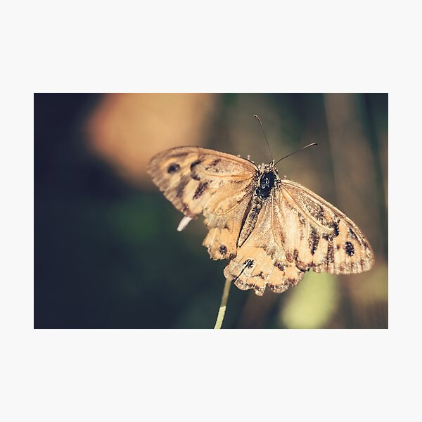 Butterfly Wingspan Photographic Print