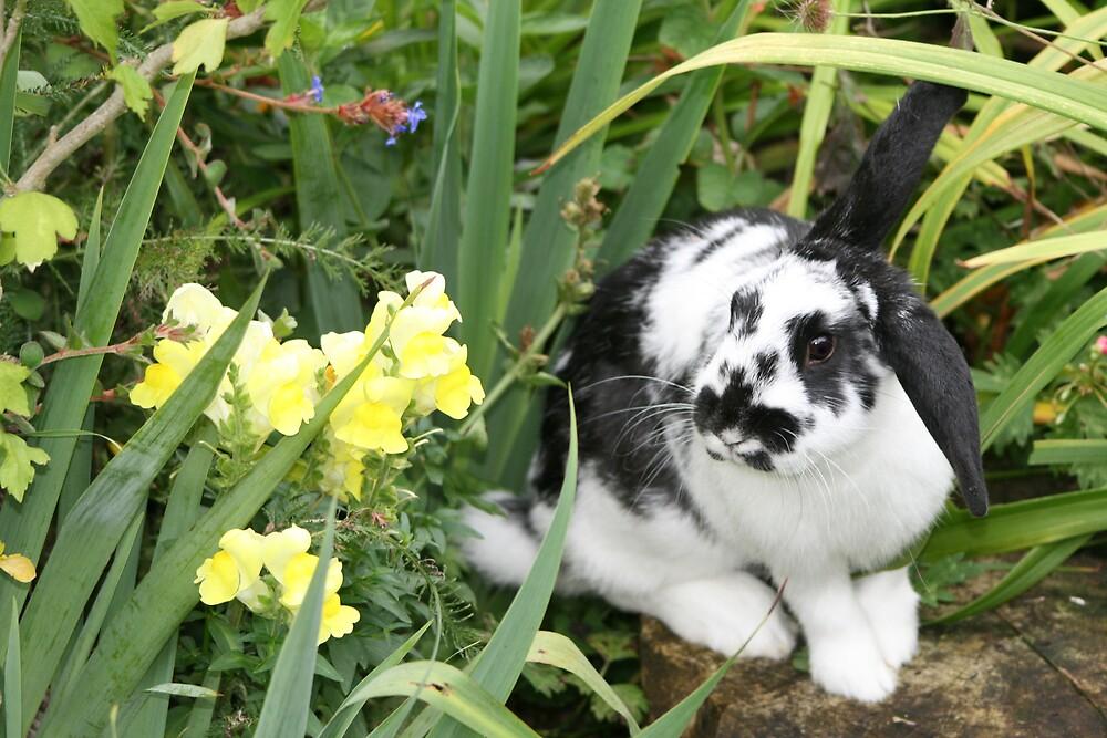 Rabbit In Garden by XMissySJx