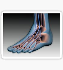 Conceptual image of human foot with nervous system. Sticker