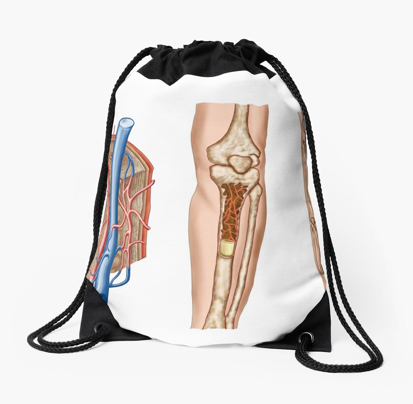 Mochilas de cuerdas «Anatomía de la médula ósea humana.» de ...