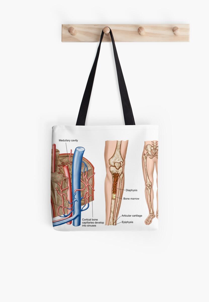 Bolsas de tela «Anatomía de la médula ósea humana.» de ...