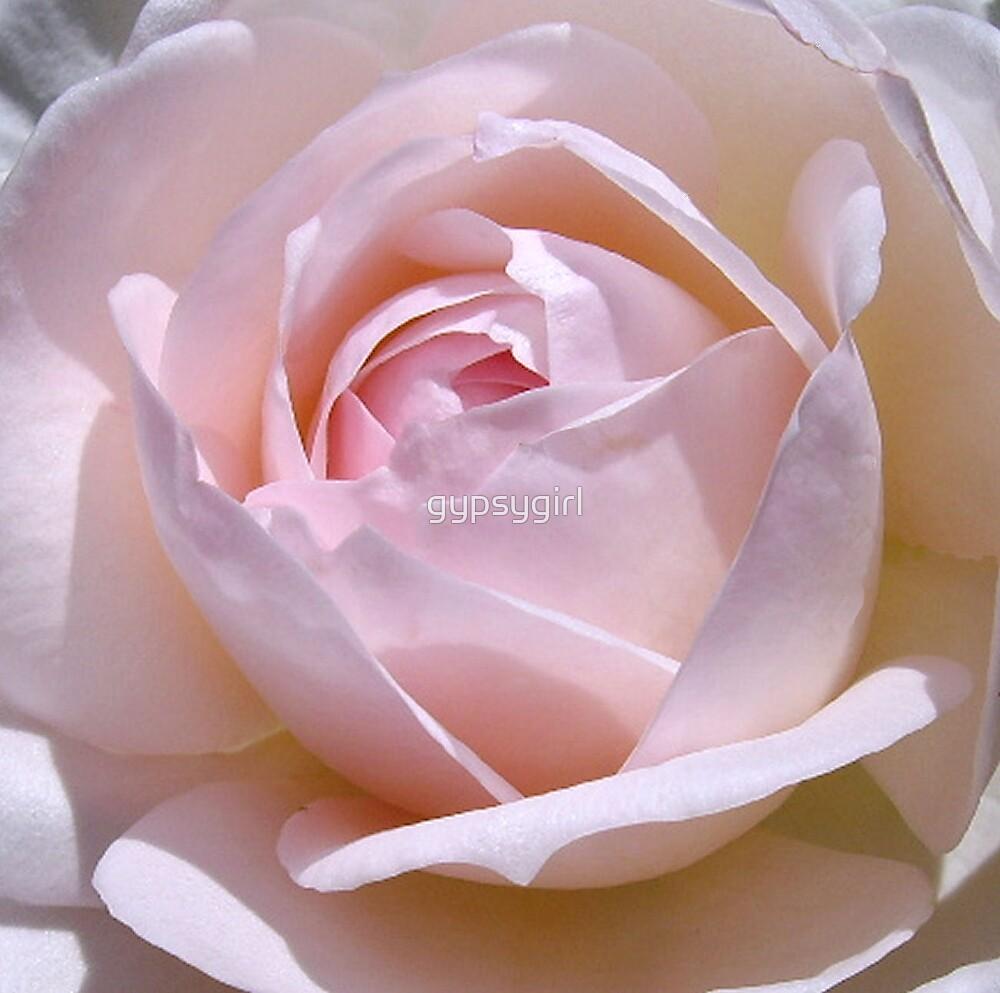 Pink Rose III by gypsygirl