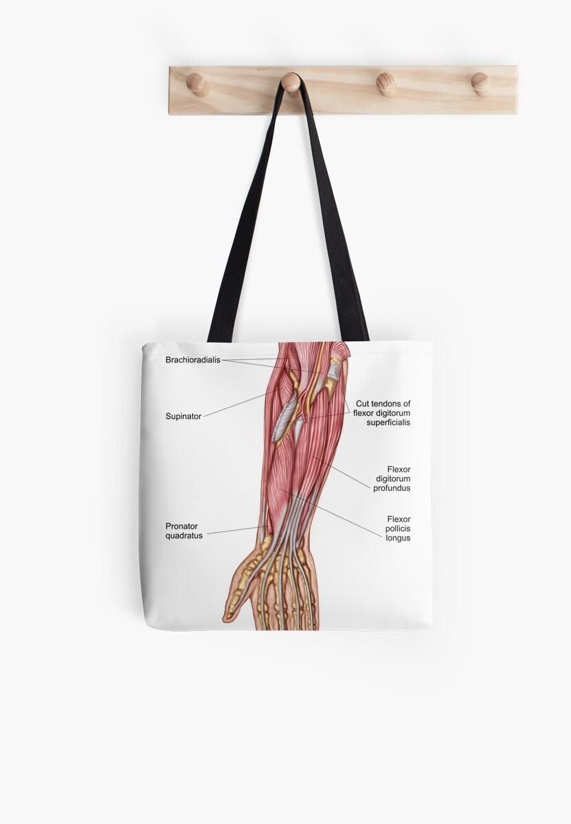 Bolsas de tela «Anatomía de los músculos humanos del antebrazo ...