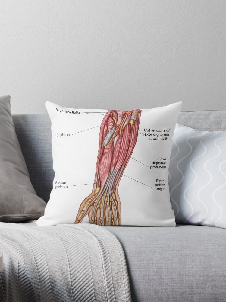 Cojines «Anatomía de los músculos humanos del antebrazo, vista ...