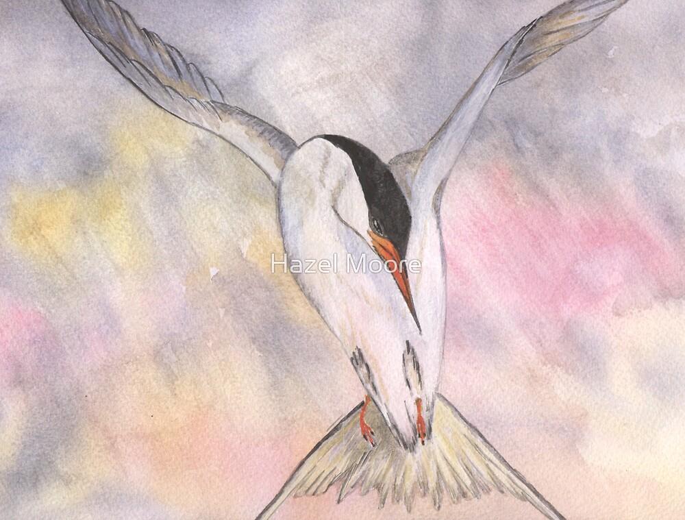 Tern in Flight by Hazel Moore