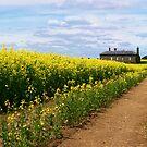Fields of Gold by Sam Sneddon