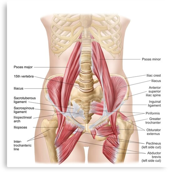 Lienzos metálicos «Anatomía de iliopsoa, también conocida como los ...