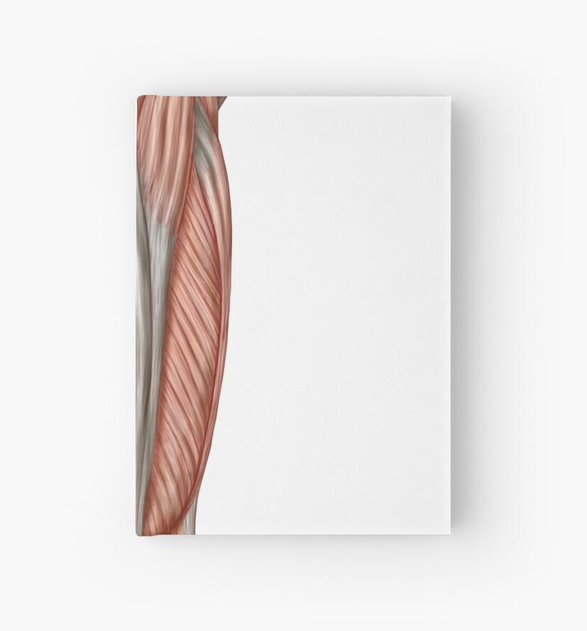 Cuadernos de tapa dura «Anatomía de los músculos del muslo humano ...