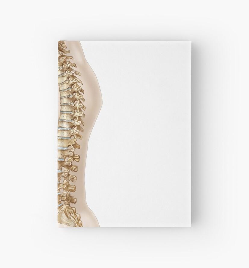 Cuadernos de tapa dura «Anatomía de la columna vertebral humana ...
