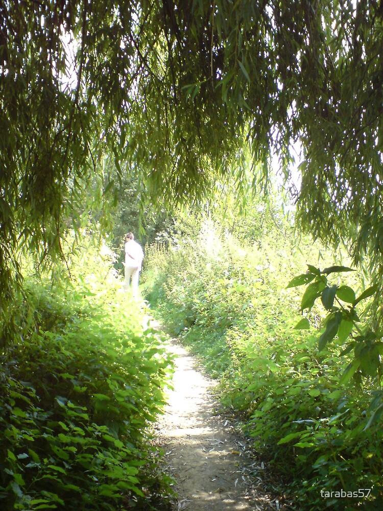 Woodland in Kent by tarabas57