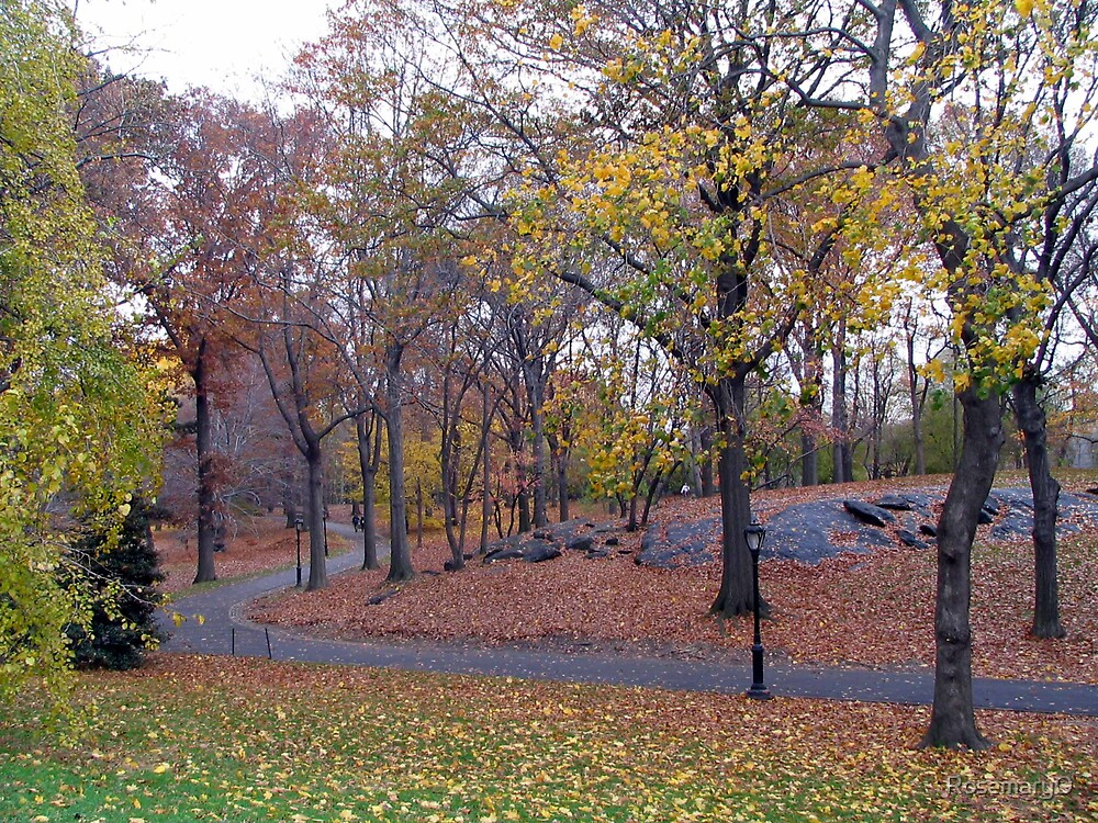 Central Park, New York by RosemaryO