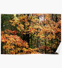 Fall Color II Poster