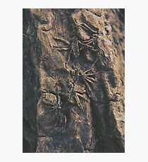 Parasite Photographic Print