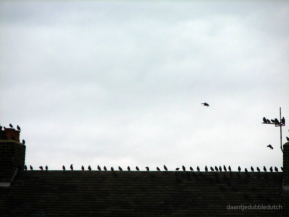 birds on the roof and from there hopefuly into a pie...... by daantjedubbledutch