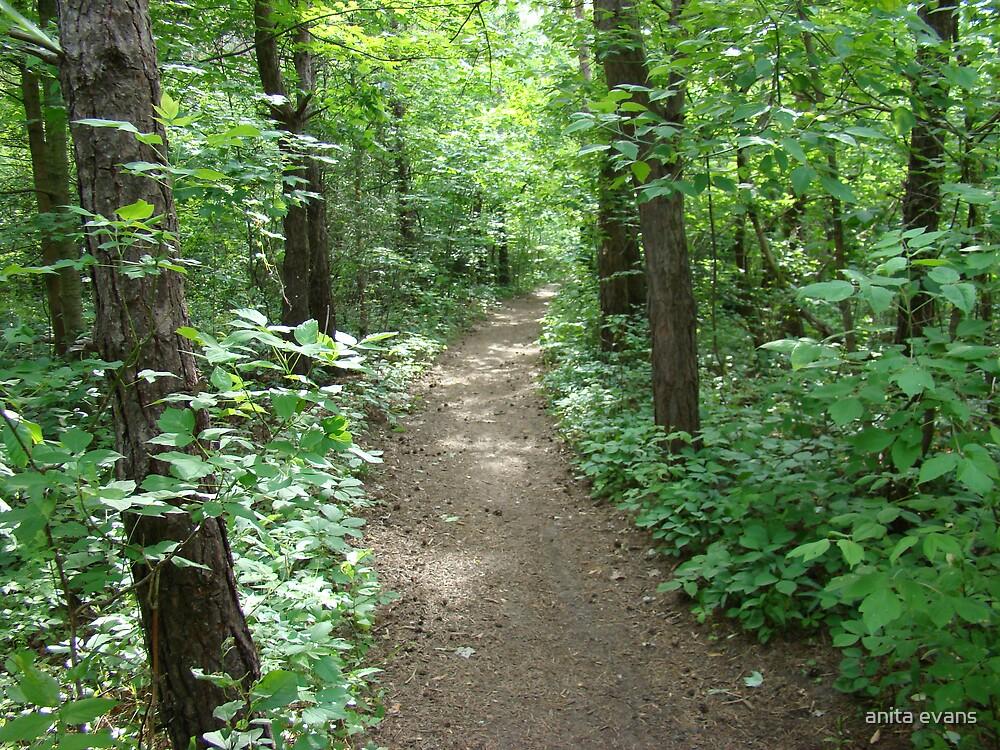 WHERE I LIKE TO WALK by anita evans